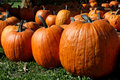 Free Pumpkins Galore Royalty Free Stock Photography - 6702147