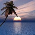 Free Palm Stock Image - 6708011