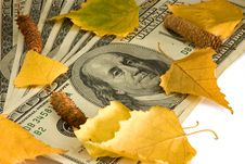 Dollars Of The USA And Birch Leaves Stock Photos