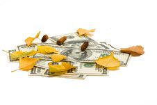 Dollars Of The USA And Birch Leaves Royalty Free Stock Photos