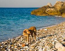 Dog On A Beach Stock Photography