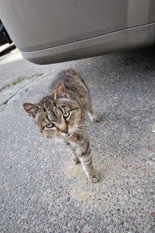 Free Take Me Home, Homeless Cat On Street Royalty Free Stock Photos - 6702158