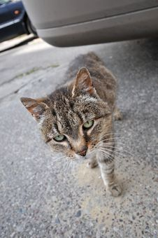 Free Take Me Home, Homeless Cat On Street Royalty Free Stock Images - 6702229