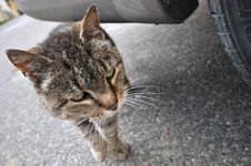 Free Take Me Home, Homeless Cat On Street Royalty Free Stock Images - 6702259