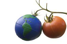 Free Red Organic Tomato Stock Photography - 6702452