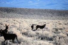 Free Wild Donkey Royalty Free Stock Photos - 6702568