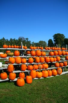 Free Rows Of Pumpkins Stock Photography - 6702632