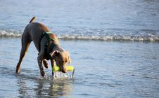 Free Play Fetch Royalty Free Stock Images - 6702699