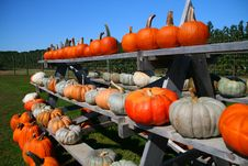 Rows Of Pumpkins Stock Images