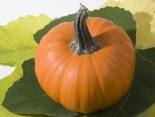 Free Small Pumpkin Stock Photo - 6703880