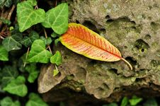 Free Fall Leaves Royalty Free Stock Images - 6704589