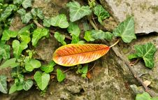 Free Fall Leaves Stock Photography - 6704642