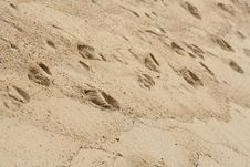 Free Foot Prints In Sand Stock Photo - 6705180