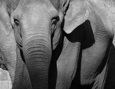 Free Elephant Stock Image - 6705521