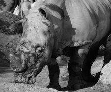 Free Rhinoceros Stock Images - 6705524