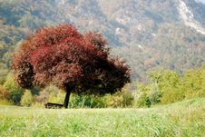 Free Red Tree And The Park Bench Royalty Free Stock Photos - 6707038