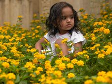 Asian Girl In A Bed Of Flowers Stock Photo