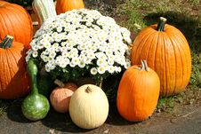 Free Bunch Of Pumpkins And A Mum Stock Photo - 6707340