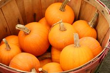 Free Bunch Of Small Pumpkins In A Basket Royalty Free Stock Images - 6707349