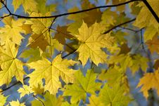 Free Autumn Leaves Background Stock Photography - 6707682