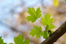 Free Green Leaves Stock Photography - 6707692