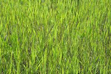 Free Green Grass Texture Stock Photography - 6707922