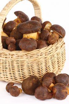 Free Mushrooms Stock Image - 6708151