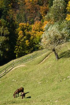 Free Autumn Landscape In Romania Royalty Free Stock Images - 6708599