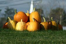 Free Pile Of Pumpkins Royalty Free Stock Photos - 6708678