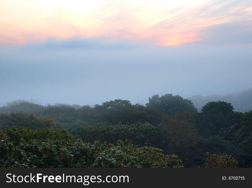 Foggy (hazy) forest and scarlet sunrise.