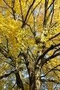 Free Autumn Royalty Free Stock Photos - 6710958