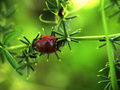 Free Ladybird On The Branch Stock Images - 6711474
