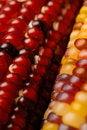 Free Indian Corn Stock Photo - 6715990