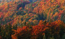 Free Autumn Landscape Stock Images - 6710934