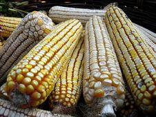 Free Corn Stock Images - 6710964