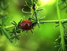 Ladybird On The Branch Stock Images