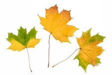 Free Colorful Autumn Leaves Stock Photo - 6711710