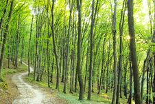 Free Forest Stock Image - 6711871