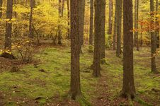 Free Autumn Forest Royalty Free Stock Image - 6712356