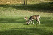 Free Deer Stock Photos - 6712503