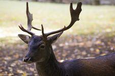 Free Deer Stock Images - 6712644