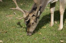 Free Deer Stock Image - 6712761