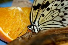 Free Butterfly On Fruit Royalty Free Stock Photo - 6713335