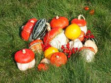 Free Autumn Still-life Royalty Free Stock Photography - 6715217