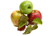 Free Gala And Granny Smith Apples Stock Photography - 6715852