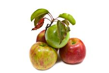 Free Gala And Granny Smith Apples Royalty Free Stock Image - 6715856