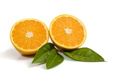 Free Oranges Isolated On White Stock Photo - 6715890