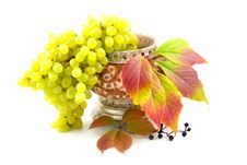Free Cultural And Wild Grapes Royalty Free Stock Photography - 6716217