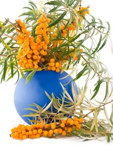 Medical And Beautiful Buckthorn Berries Stock Image