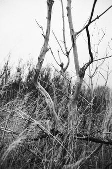 Free Dead Tree Stock Photography - 6716272